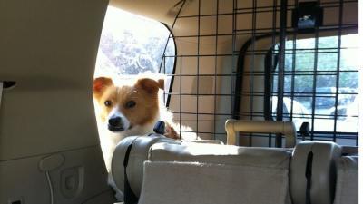 Vuil van huisdieren in de auto verwijderen